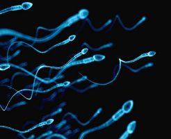 精子の数が少ない