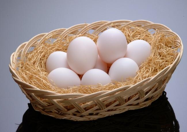 テストステロン 鶏卵