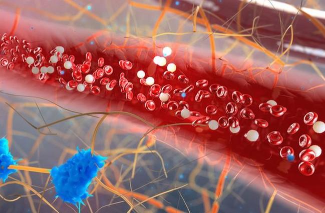 動脈硬化を予防 トンカットアリ
