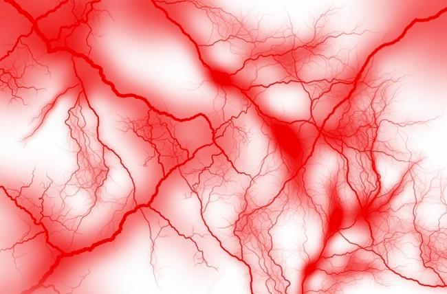 イチョウ葉エキス 血管拡張