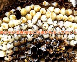 蜂の子 効果 まとめ