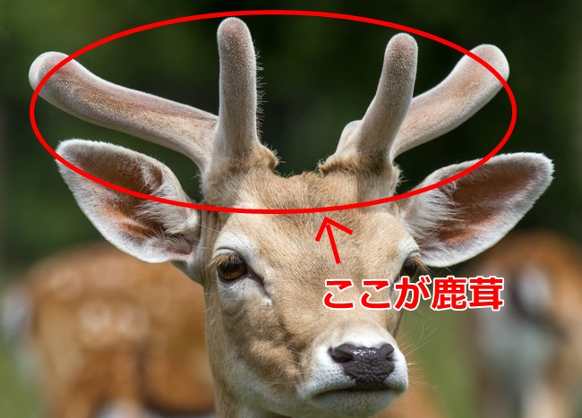 鹿茸 効果 効能