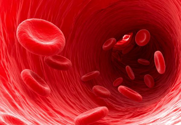 スクワレンの効果  血液