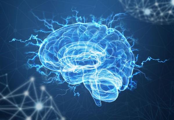 ヒスチジン 効果 脳