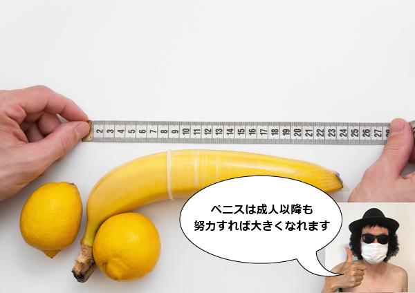 ペニスの大きさ 平均 日本人男性